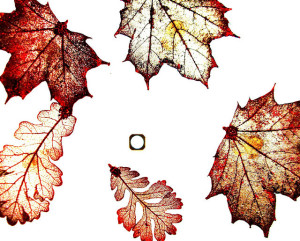 A collection of fall leaves