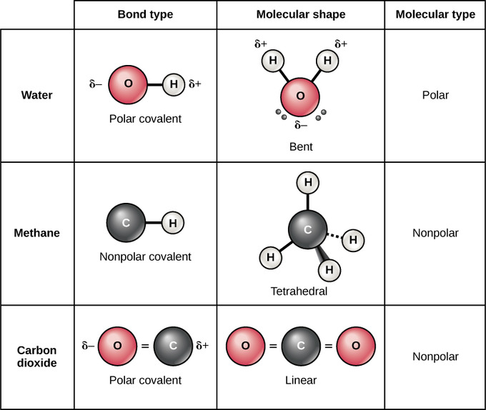 polar bear mouth diagram diagram chemistry polar diagrampolar atoms, isotopes, ions, and molecules | boundless biology