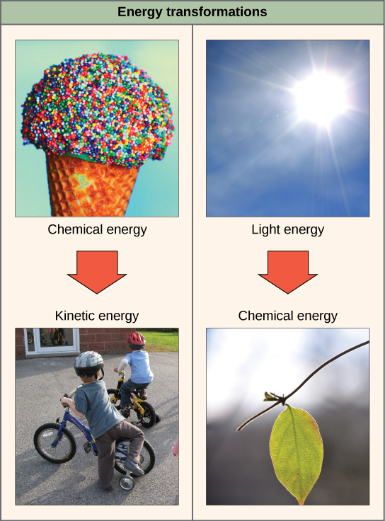 Potential, Kinetic, Free, and Activation Energy | Boundless Biology