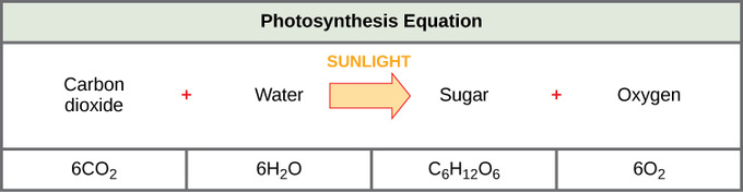 photosythesis word equation The overall new reaction for photosynthesis formula according to ruban and kamen question 2: write the word equation and balanced symbol equation for photosynthesis.