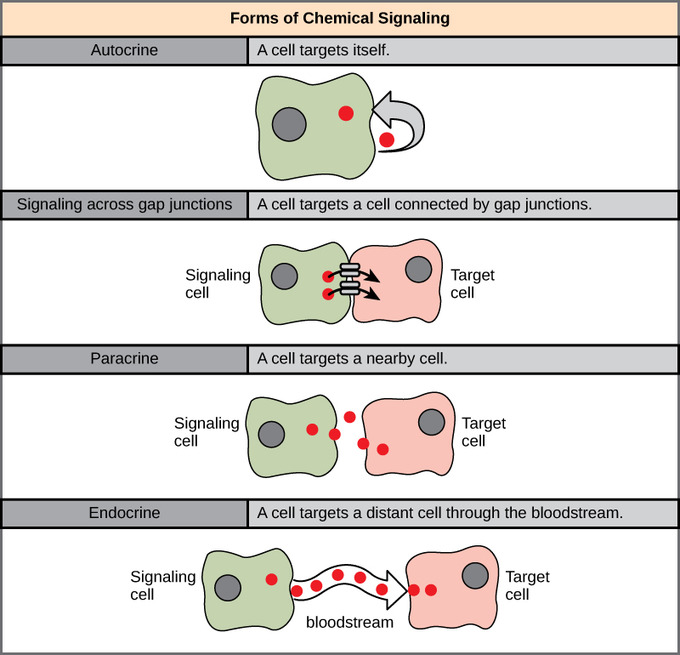 Do Organisms Make There Own Food In Chemosynesis