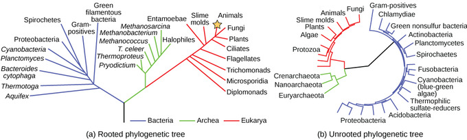 201a Phylogenetic Trees Biology Libretexts