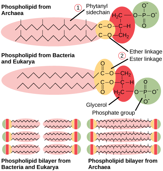 Structure Of Prokaryotes Boundless Biology