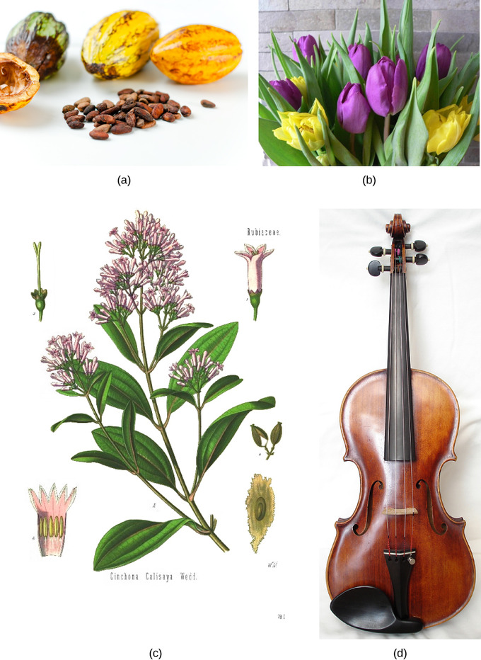 the biological importance of plants to humans essay The nitrogen cycle is the most important biogeochemical cycle importance of nitrogen in barley essay humans because we get protein from the plants.
