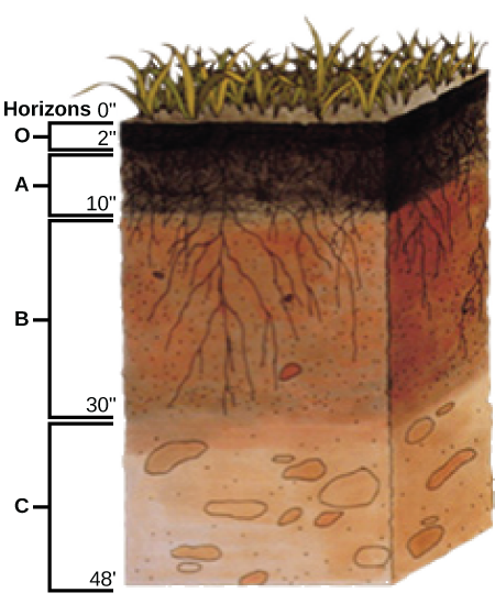 The soil boundless biology for Soil horizons layers