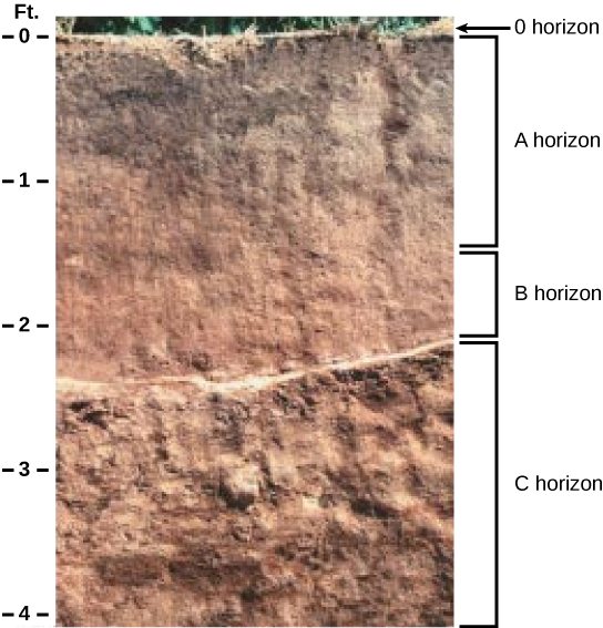 The soil boundless biology for Soil horizons