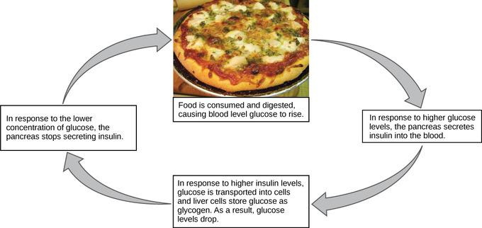 Does Blood Pressure Increase Or Decrease After Eating Food