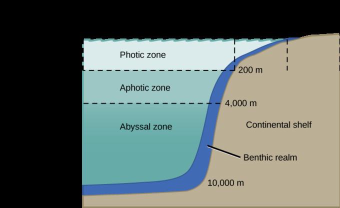 Aquatic Biomes Boundless Biology