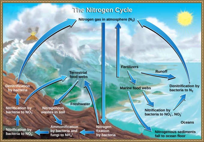 the boundless carbon cycle The cycle of farm industrialization degrades fertile soil, pollutes water systems, reduces biodiversity and requires intensive energy production to yield crop growth.