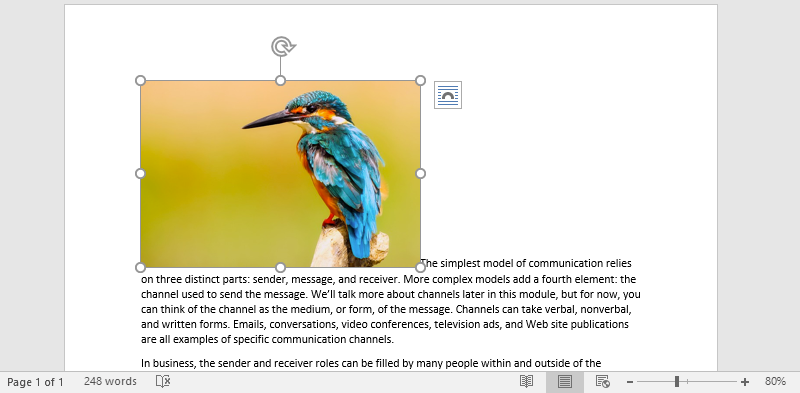 A Microsoft Word document is open with text on it. On the document an image of a colorful kingfisher is visible.