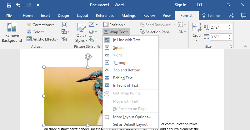 A Microsoft Word document is open with text on it. On the document an image of a colorful kingfisher is visible. Under the format tab on the ribbon menu the option to wrap text has been selected which has as a result opened up a new dropdown menu allowing different ways to wrap text around an image.