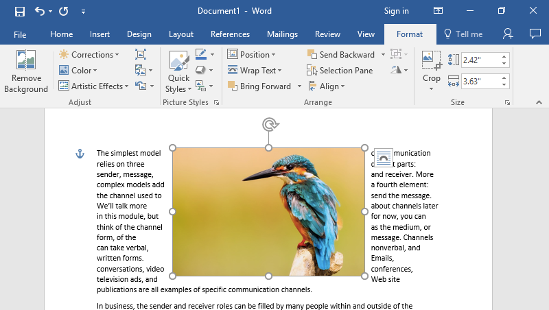 A Microsoft Word document is open with text on it. On the document an image of a colorful kingfisher is visible. The text has been wrapped to either side of the image, making the image the center of the page.