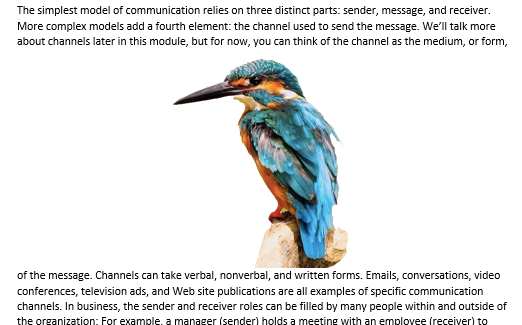 "A Microsoft Word document is open with text on it. On the document an image of a colorful kingfisher is visible. This is showing an image with ""Top and Bottom Text Wrap""."