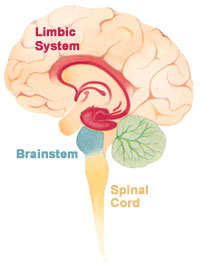 Structure and Function of the Brain | Boundless Psychology