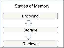 Introduction to Memory | Boundless Psychology