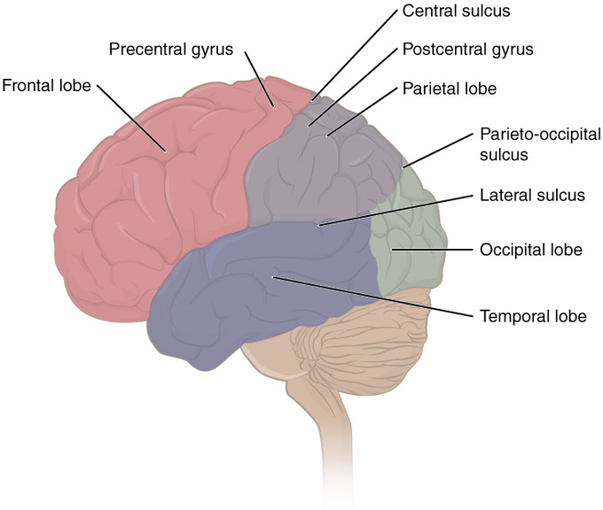 Long-Term Memory Brain