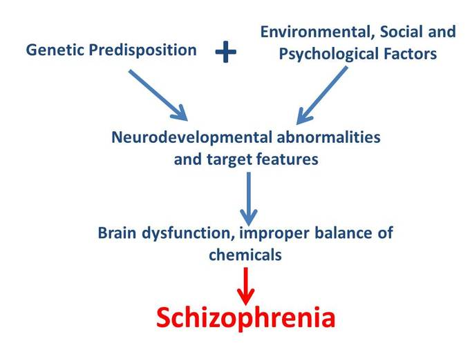 factors for schizophrenia The cause of schizophrenia is not yet known, and research into it is happening all the time but it is generally agreed that schizophrenia is caused by a combination of factors rather than a single one this page has information about possible causes of schizophrenia the onset of schizophrenia for.