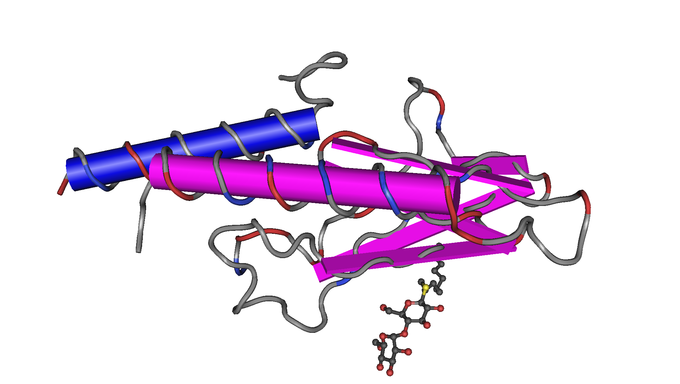 This is a color illustration of the glucagon receptor structure. Glucagon is a pancreatic peptide hormone that, as a counter-regulatory hormone for insulin, stimulates glucose release by the liver and maintains glucose homeostasis.