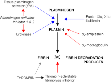 This diagram describes the process of fibrinolysis. First, the plasmogen is acted upon by tPA, plasminogen activator inhibitor 1 and 2, urokinase, and factor XIa, XIIa Kallakrein. Then plasma is acted upon by o2 antiplasmin and o2 macroglobulin. Fibrin and fibrin degradation products are acted upon by thrombin and thrombin-activatable fibrinolysis inhibitor.