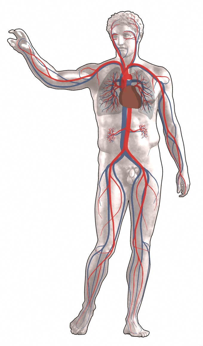 Physiology Of Circulation Boundless Anatomy And Physiology