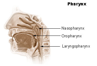This figure illustrates the three main subdivisions of the pharynx: the nasopharynx, the oropharynx, and the laryngopharynx.