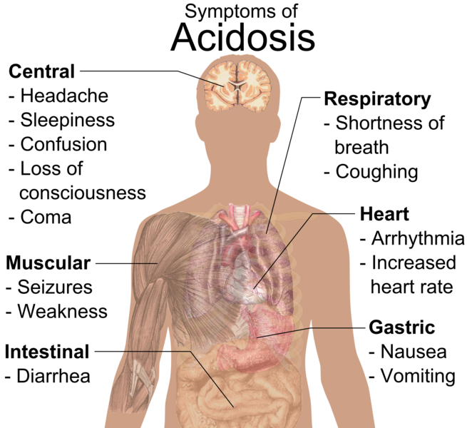 This diagram shows the symptoms of acidosis based on body part. For example, in the respiratory system, symptoms are shortness of breath and coughing.