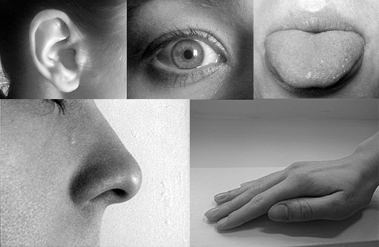 These are five closeup, black and white photographs of an ear, eye, tongue, nose, and hand.