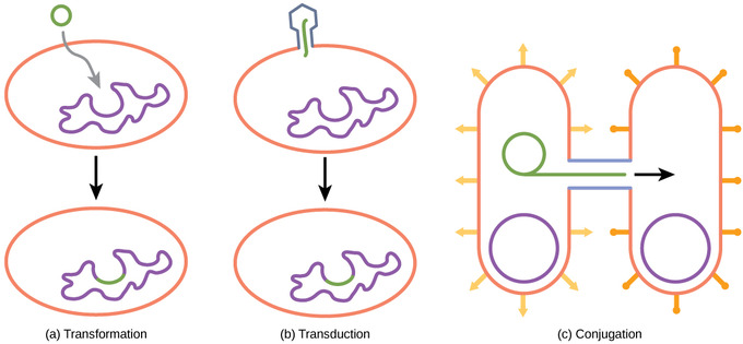 transformation biology definition