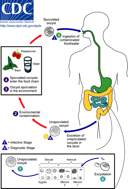 Food Poisoning Occurs Because Food Is Left At Room Temperature