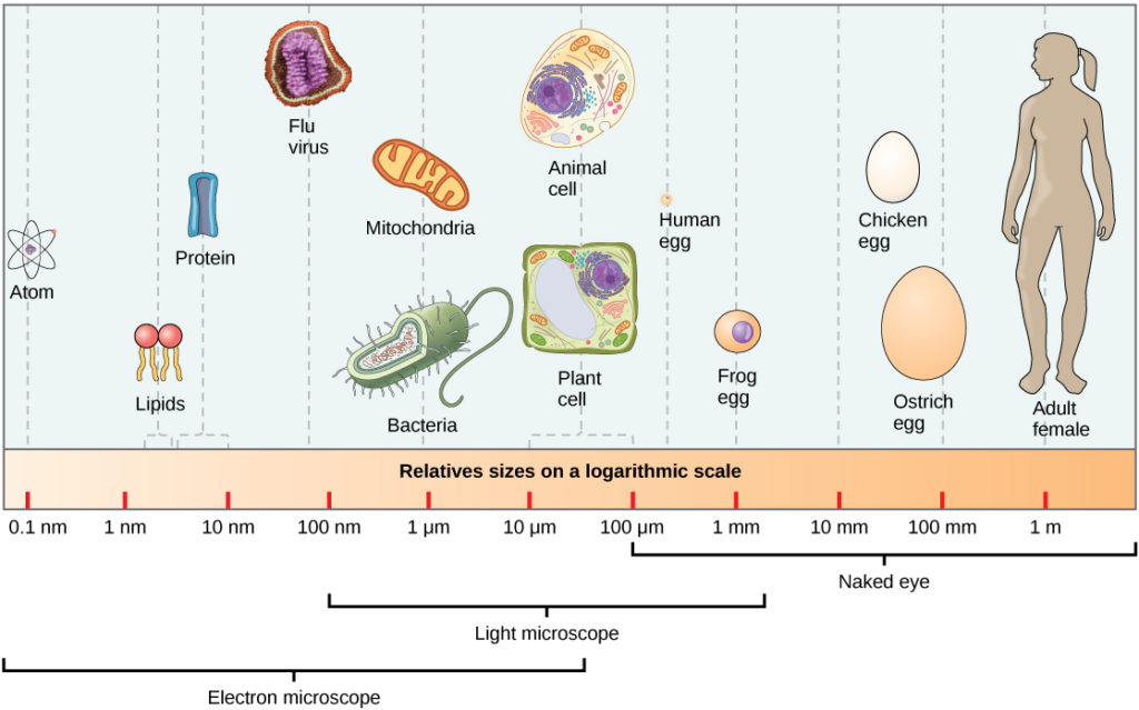 Comparing Prokaryotic and Eukaryotic Cells | Biology I