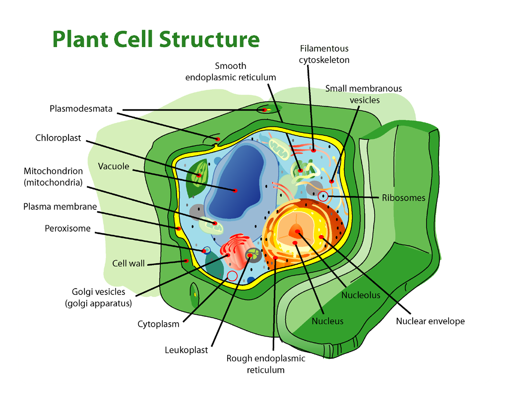 plant_cell_structure_edit