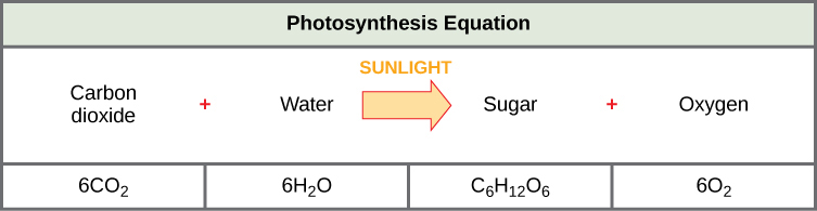 Overview of photosynthesis biology i the photosynthesis equation is shown according to this equation six carbon dioxide molecules and ccuart Gallery