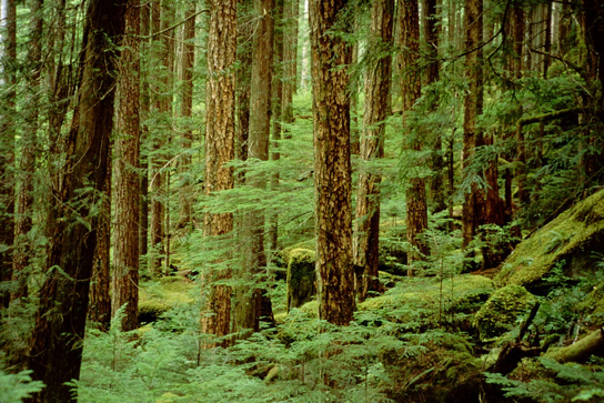 This photo shows undergrowth in a forest.