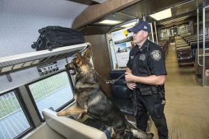 A transit police officer holds a dog's leach while the dog investigates a suitcase on a train.