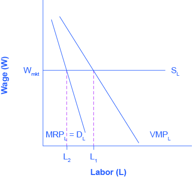 The graph shows the Marginal Product of Labor. The x-axis is Labor. The y-axis is Wage. A horizontal line indicating the going market wage projects from about halfway up the y-axis. Two curves are includesd in order to demonstrate the difference for firms with market power. The first curve represents normal firms, and proceeds from right to left in a downward direction; where it intersects the Wage horizontal line, it is point L1. The second curve, representing firms with market power, is steeper, and intersects the Wage line earlier (at a lower level of employment), at point L2, where the going market wage equal's the firm's marginal revenue product.