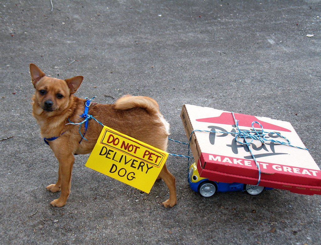 "Photo of a small dog pulling a wagon with two Pizza Hut boxes tied to it. The dog wears a sign that reads, ""Do Not Pet Delivery Dog."""