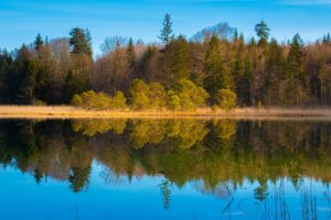 Photo of a clear lake with trees reflected in the water. Blue sky and no clouds.