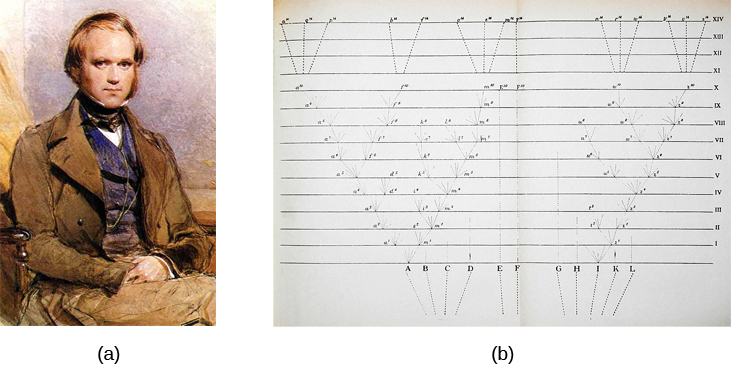Image (a) is a painted portrait of Darwin. Image (b) is a sketch of lines that split apart into branched structures.