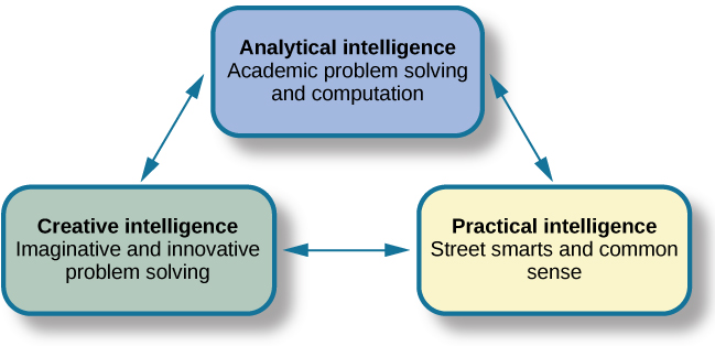 """Three boxes are arranged in a triangle. The top box contains """"Analytical intelligence; academic problem solving and computation."""" There is a line with arrows on both ends connecting this box to another box containing """"Practical intelligence; street smarts and common sense."""" Another line with arrows on both ends connects this box to another box containing """"Creative intelligence; imaginative and innovative problem solving."""" Another line with arrows on both ends connects this box to the first box described, completing the triangle."""