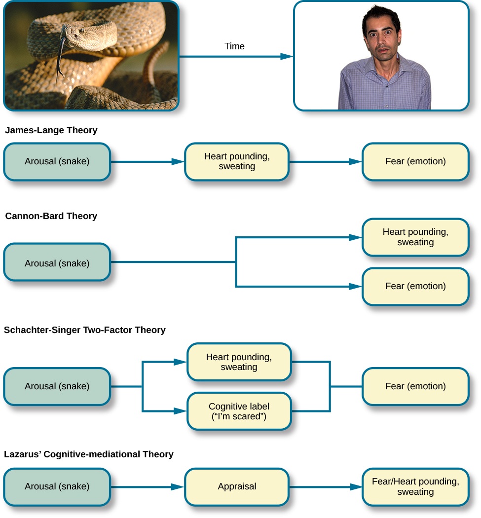 """A diagram shows a photograph of a snake on the left and a photograph of a frightened person on the right, with an arrow labeled """"time."""" Beneath the photos are flow diagrams of four theories of emotion. In the """"James-Lange theory,"""" a box labeled """"arousal (snake)"""" leads to a box labeled """"heart pounding, sweating,"""" which leads to a box labeled """"fear (emotion)."""" In the """"Cannon-Bard theory,"""" a box labeled """"arousal (snake)"""" splits into two boxes labeled """"heart pounding, sweating,"""" and """"fear (emotion)."""" In the """"Schachter-Singer Two-Factor theory,"""" a box labeled """"arousal (snake)"""" leads to two boxes labeled """"heart pounding, sweating"""" and cognitive label (""""I'm scared)"""" which then lead to a single box labeled """"fear (emotion)."""" In the """"Lazarus' Cognitive-mediational theory,"""" a box labeled """"arousal (snake)"""" leads to a box labeled """"appraisal,"""" which leads to a box labeled """"fear/heart pounding, sweating."""""""