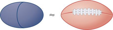 This figure has an oval that is approximately equal to the image of a football.