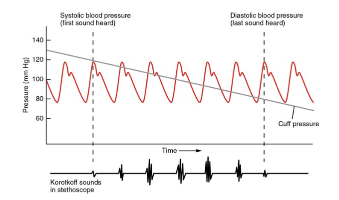 describe the relationship between vessel radius and blood flow rate