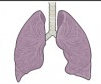 a pair of lungs