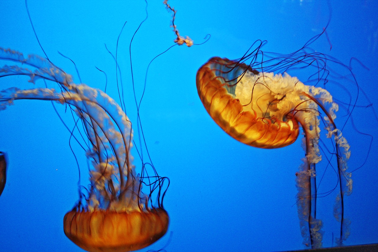 two jellyfish swimming