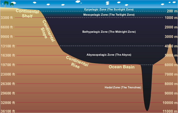 A profile of the ocean. The Epipelagic zone (also known as the sunlight zone) is found between the ocean surface and 200 meters deep. Next is the mesopelagic zone (also known as the twilight zone), which lasts until 1000 meters deep. Next is the Bathypelagic zone (also known as the midnight zone), which lasts until 4000 meters deep. Next is the Abyssopelagic zone (also known as the abyss), which lasts until 6000 meters deep. Below this is the Hadal Zone (also known as the trenches) which lasts as far deep as humans have discovered (11000 meters deep).
