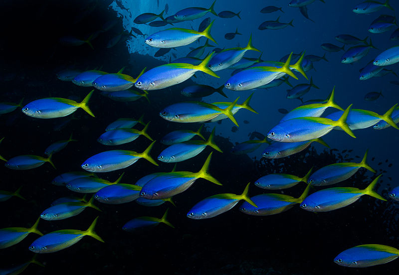 a school of luminescent fish