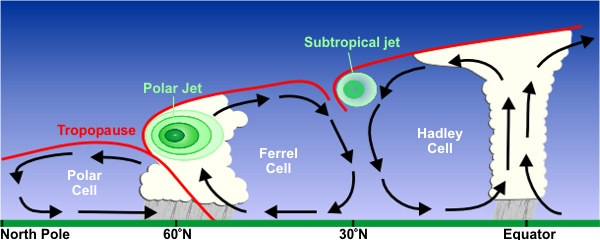 As wind cells get further from the the pole and closer to the equator, the cells get larger. The Polar cell lies between the North Pole and sixty degrees north. The ferrel cell lies between 60 and 30 degrees north and interacts with the polar jet. The Hadley cell lies between 30 degrees north and the equator and interacts with the subtropical jet.