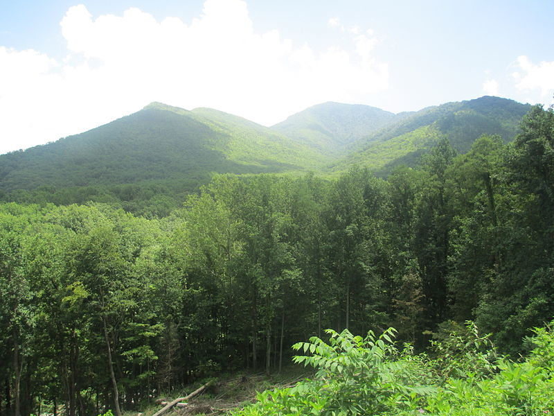 A mountainous region with both deciduous trees and conifer trees.