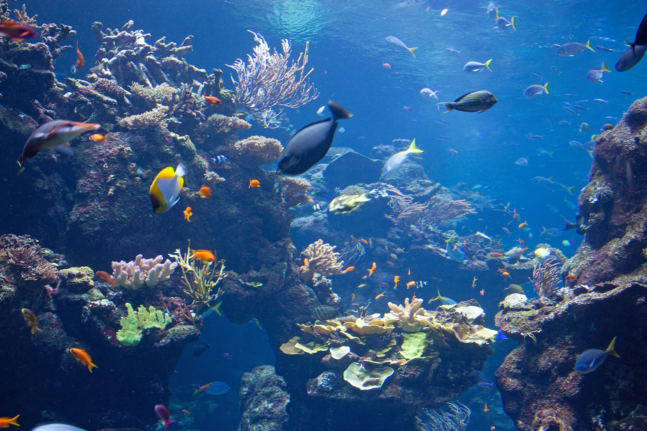 Tropical fish swimming under water, through undersea plant life and coral