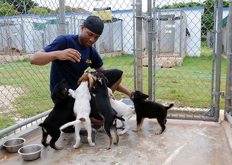 A young man kneeling to pet several puppies in a kennel